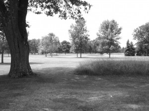 natural fescues