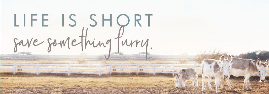 Save Something Furry